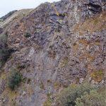 Peregrine Falcon nest